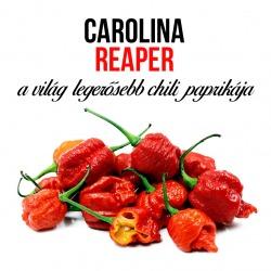 Carolina reaper, a legerősebb chili paprika - ajándék növény fa kaspóval
