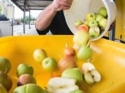 A hibás részek kivágása után elődarabolás nélkül tölthető be a gyümölcs