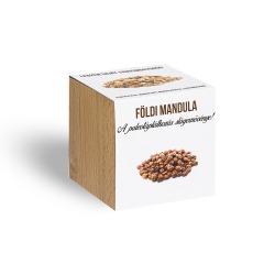 Földimandula /tigrismogyoró/ - ajándék növény fa kaspóval
