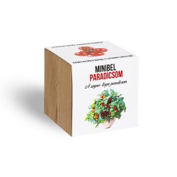 Mini liliputi paradicsom - ajándék növény fa kaspóval