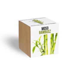 Moso bambusz - ajándék növény fa kaspóval