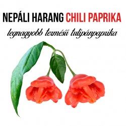 Nepáli harang tulipán paprika  - ajándék növény fa kaspóval