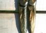 Füstölt hal